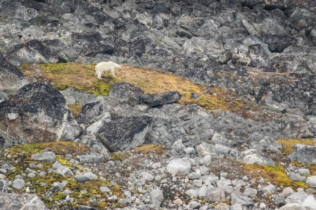 Svalbard 2016 KN-23-X3